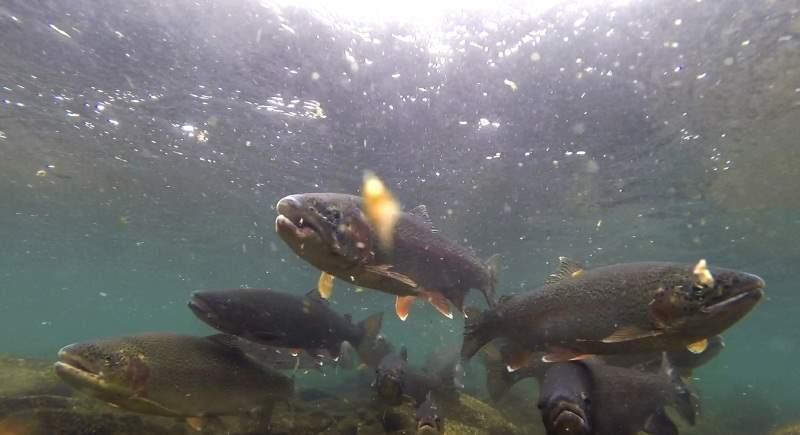 under_trout2