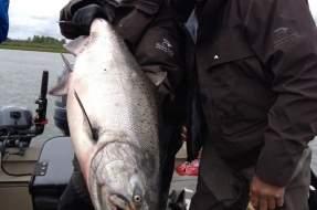 Big King Salmon  in Bristol Bay Alaska at Mission Lodge